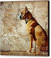 Semper Fidelis Canvas Print by Judy Wood