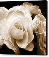 Sepia Roses With Rain Drops Canvas Print by Jennie Marie Schell