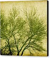 Serene Green 2 Canvas Print