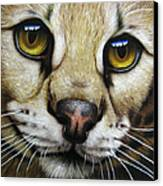 Serval Canvas Print by Jurek Zamoyski