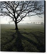 Shadow Tree Canvas Print by Anne Gilbert