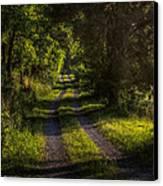 Shady Country Lane Canvas Print by Paul Herrmann