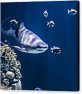 Shark Hunting Canvas Print