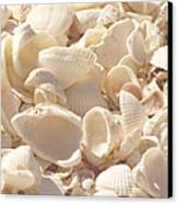She Sells Seashells Canvas Print by Kim Hojnacki