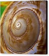 Shell Spiral Canvas Print by Garry Gay