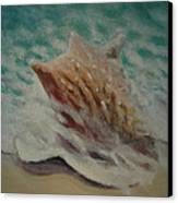Shell Two - 2 In A Series Of 3 Canvas Print