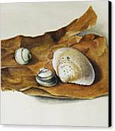 Shells On Paper Canvas Print by Horst Braun