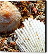 Shells On Sand Canvas Print by Riad Belhimer