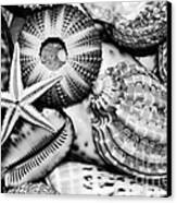 Shellscape In Monochrome Canvas Print