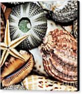 Shellscape Canvas Print