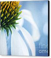 She's A Little Blue Canvas Print by Darren Fisher