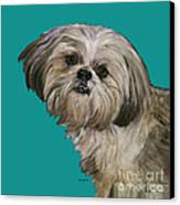 Shih Tzu On Turquoise Canvas Print by Dale Moses