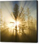 Shining Through Canvas Print by Peggy Collins
