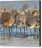 Shorebirds At Flamingo Bay Canvas Print by Karen Lindquist