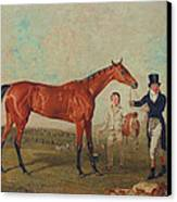 Shoveller Held By Her Trainer Will Chifney Canvas Print by Benjamin Marshall