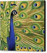 Showoff - Peacock Painting Canvas Print by Prashant Shah