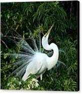 Showy Great White Egret Canvas Print