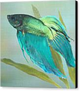 Siamese Fighting Fish Canvas Print by IM Spadecaller
