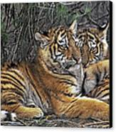 Siberian Tiger Cubs Endangered Species Wildlife Rescue Canvas Print