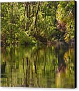 Silver Springs Nature Park Florida Canvas Print by Christine Till