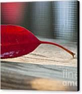 Single Red Leaf Canvas Print
