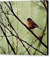 Sittin' In A Tree Canvas Print