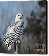Sitting On The Fence- Snowy Owl Perched Canvas Print by Inspired Nature Photography Fine Art Photography