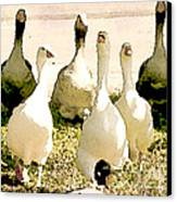 Six Geese And A Duck Canvas Print by Artist and Photographer Laura Wrede