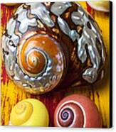 Six Snails Shells Canvas Print by Garry Gay