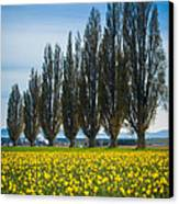 Skagit Trees Canvas Print by Inge Johnsson