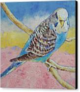 Sky Blue Budgie Canvas Print by Michael Creese