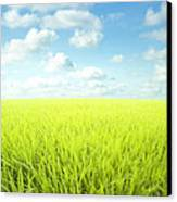 Sky Greens Landscape Canvas Print by Boon Mee