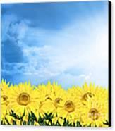 Sky Sunflower Canvas Print