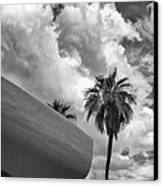 Sky-ward Palm Springs Canvas Print by William Dey