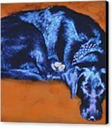 Sleeping Blue Dog Labrador Retriever Canvas Print