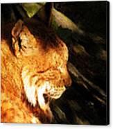 Sleeping Lynx  Canvas Print