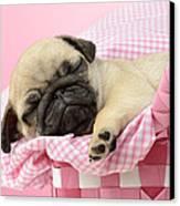 Sleeping Pug In Pink Basket Canvas Print by Greg Cuddiford
