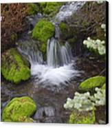 Small Waterfalls Canvas Print by Yvette Pichette