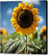 Smile Sunflower Canvas Print by Jason Bartimus
