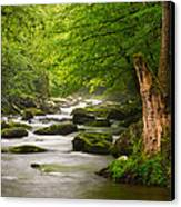 Smoky Mountains Solitude - Great Smoky Mountains National Park Canvas Print by Dave Allen