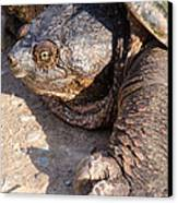 Snapping Turtle Canvas Print by Thomas Pettengill