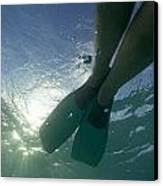 Snorkeller Legs With Flippers Underwater Canvas Print