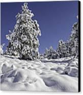 Snow Bomb Canvas Print by Tom Wilbert