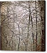 Snow Cover Forest Canvas Print by Dawdy Imagery