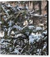 Snow Covered Branches Canvas Print by Brett Geyer
