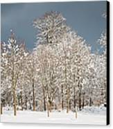 Snow Covered Trees In The Forest In Winter Canvas Print by Matthias Hauser