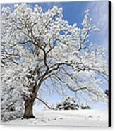 Snow Covered Winter Oak Tree Canvas Print
