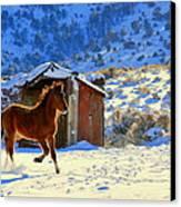 Snow Dancer  Canvas Print by Jeanne  Bencich-Nations