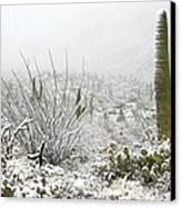 Snow Day In The Desert  Canvas Print by Saija  Lehtonen