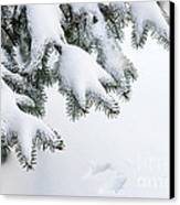 Snow On Winter Branches Canvas Print by Elena Elisseeva